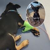 Polizei eskortiert Welpe in Tierklinik - und rettet ihm das Leben