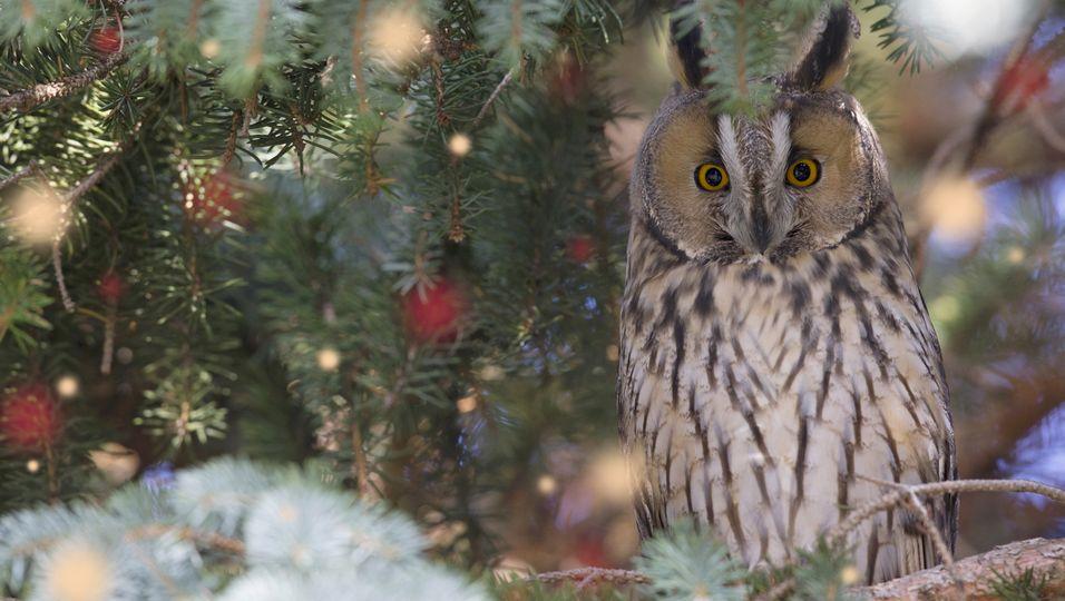 Unerwarteter Fund: Mädchen entdeckt Wildtier im Weihnachtsbaum