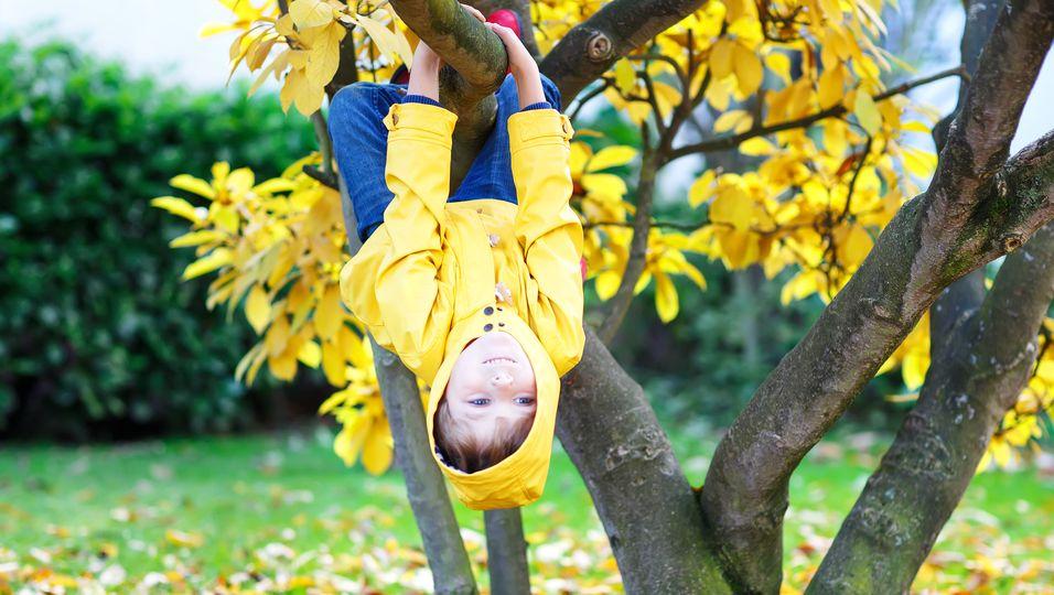 Junge klettert auf herbstlichem Baum