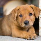 Sieben kleine Hundewelpen wurden aus einer Mülltonne gerettet. (Symbolbild)