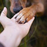 Herzzerreißendes Video - Ausgesetzter Hund zittert panisch vor Angst: In den Armen seiner Retterin blüht er plötzlich auf
