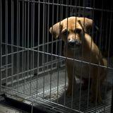 Grausame Welpen-Quälerei in Eisenach: Mann lässt Hund beinahe ertrinken