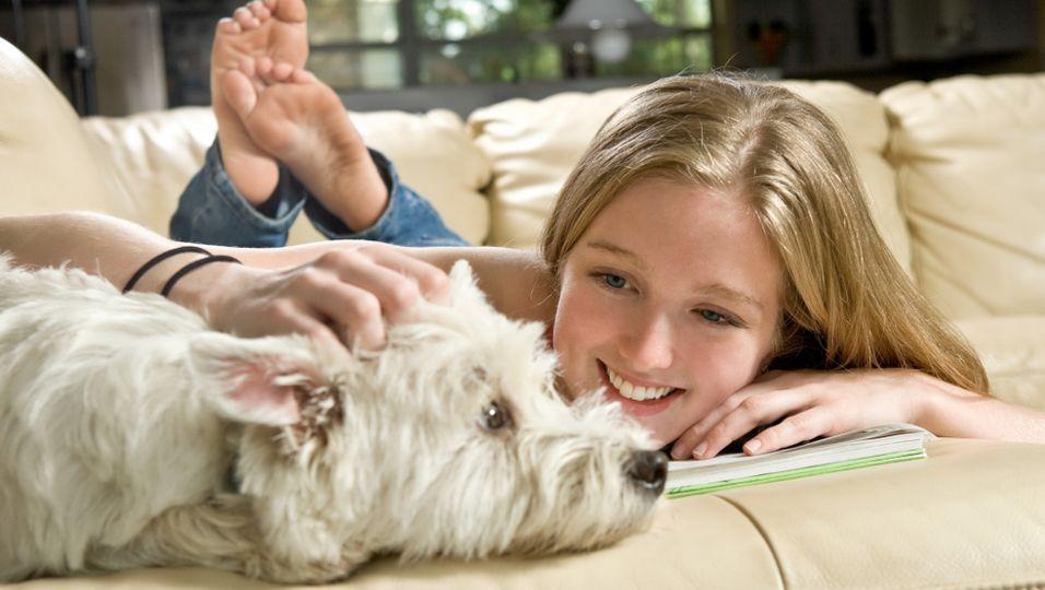 News - Hunde streicheln gegen Prüfungsstress