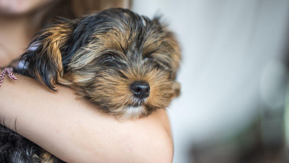 Familie findet gestohlenen Hund – 1600 Kilometer weit entfernt