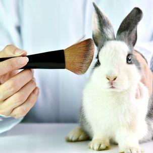 Kaninchen mit Rouge-Pinsel