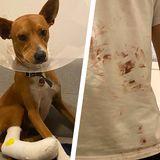 Wegen euren rücksichtslosen Isar-Partys hat mein Hund viel Blut verloren