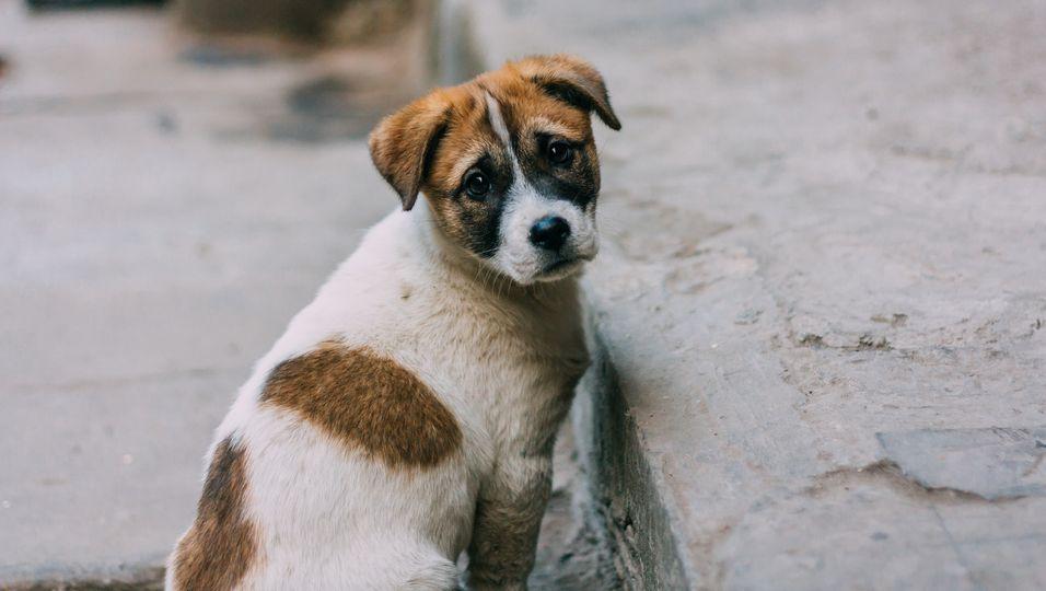 Ausgesetzter Hund wartet am Straßenrand auf sein Herrchen – das nicht mehr wiederkommt