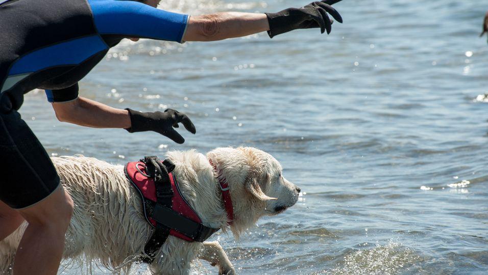 Hund Harley rettet Rehkitz vor dem Ertrinken - und weigert sich dann, von seiner Seite zu weichen