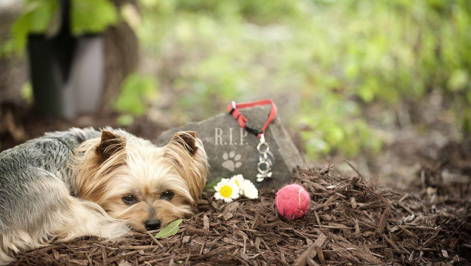 Hund am Grab