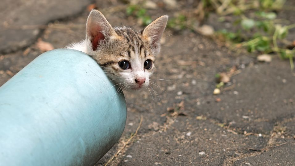 Mann rettet Katzenbaby aus Abflussrohr