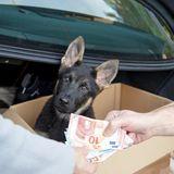 eBay Kleinanzeigen Welpen, eBay Kleinanzeigen, Tiere bei eBay Kleinanzeigen