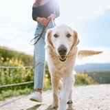 Hundespatziergang