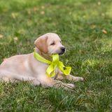 Hund, Haustier, Hundebesitzer, Hundhalsband