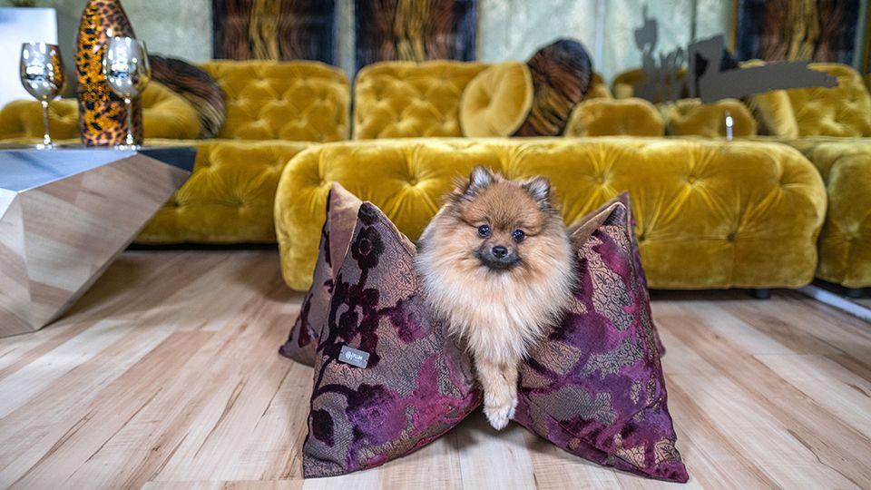 FLUM Manufaktur – das Hundekissen der Stars