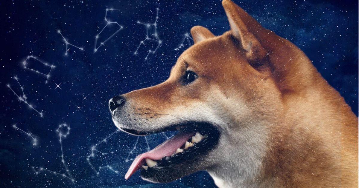 Süße Tierfreunde: Welches Haustier passt zu deinem Sternzeichen?