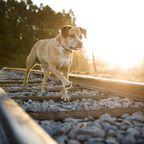 Von mehreren Zügen überrollt: Helfer retten Hund aus Zuggleisen