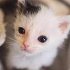 Ausgesetzte Babykatze dankt Retterin auf besondere Weise