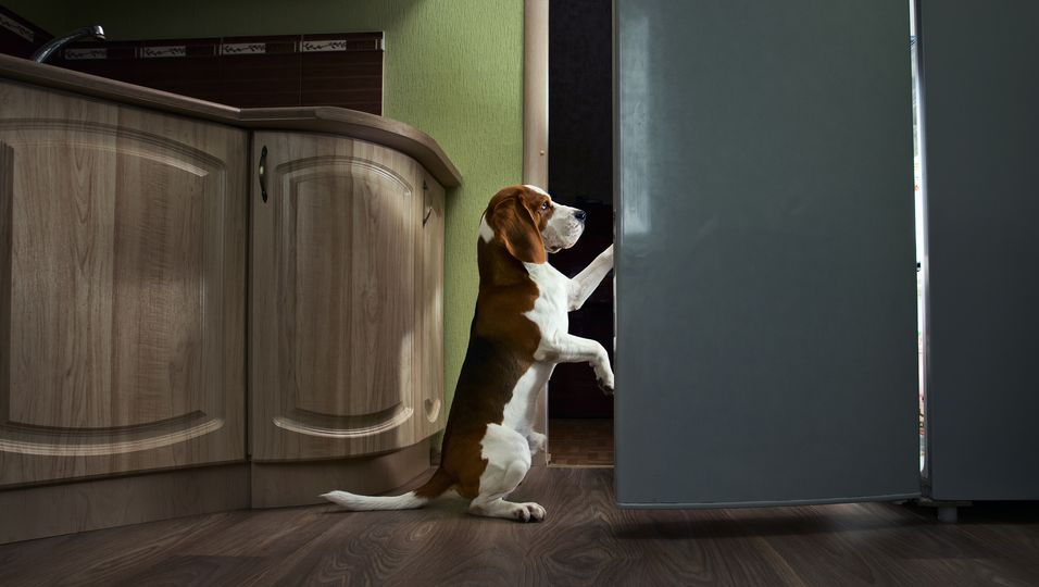 Mit Gang zum Kühlschrank: Tierische Hilfe