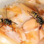 Wespen können ganz schöne Plagegeister sein - vor allem wenn man seinen Kuchen im Freien genießen möchte.