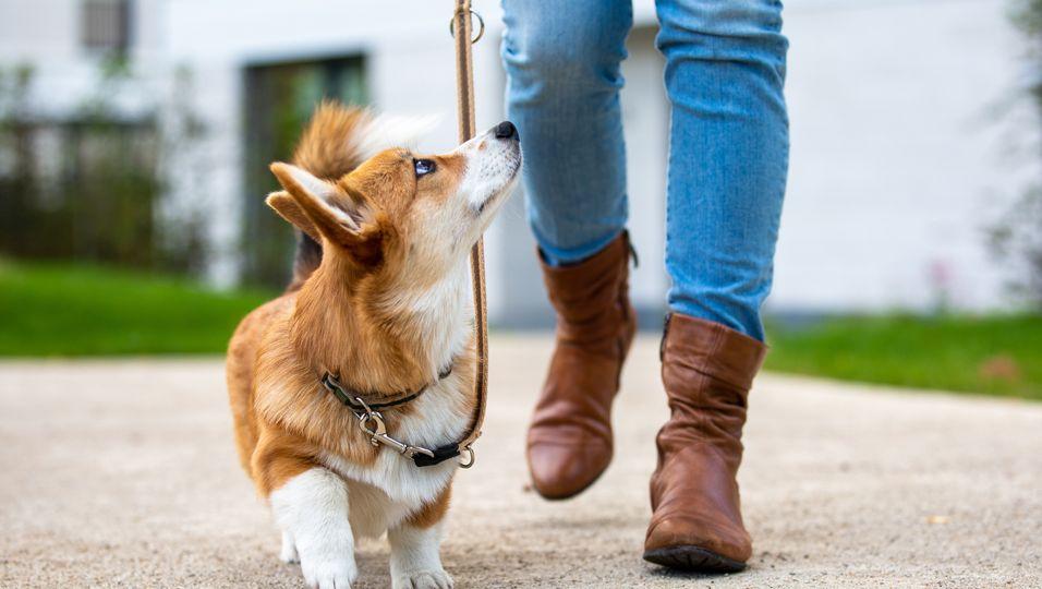 Nach Hundediebstahl: Besitzer spürt Diebin auf und hilft ihr bei Drogenentzug