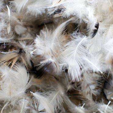 Wer eine Jacke mit Federfüllung kauft, sollte auf ein Tierschutz-Label Wert legen.