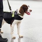 Neue Methode: Hunde sollen Coronavirus-Infizierung erschnüffeln