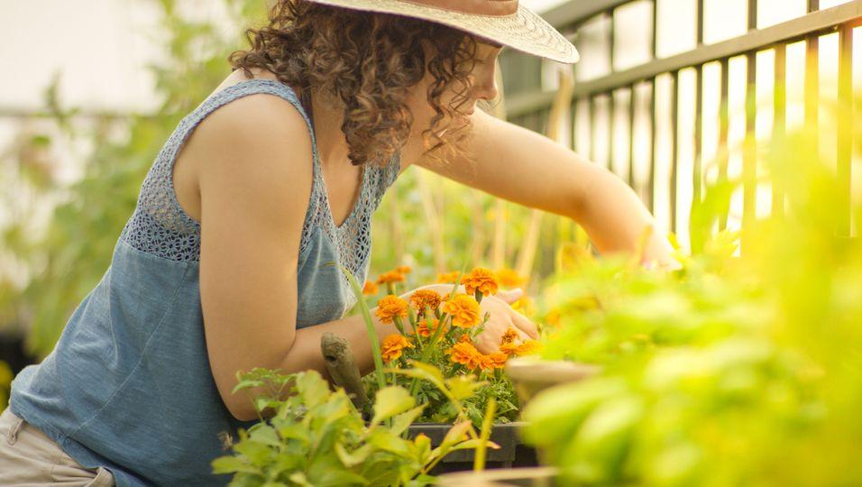 Frau beim Pflanzen
