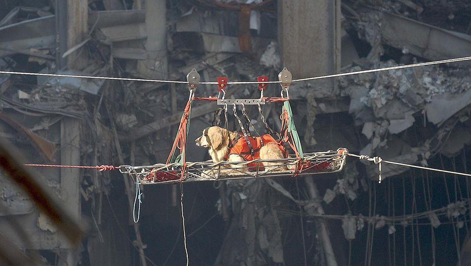 20 Jahre nach dem Anschlag Suchen, retten, Trost spenden: Die Hunde vom 11. September werden als Helden gefeiert