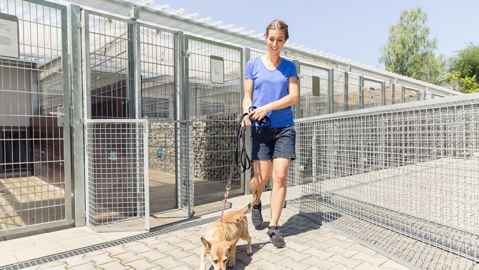 Tierheim ist das erste Mal komplett leer – doch das schürt Angst