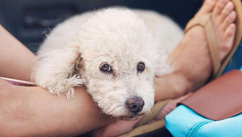 Ein Hund aus einer Massenzucht schlief im Stehen - weil er nie genug Platz hatte.