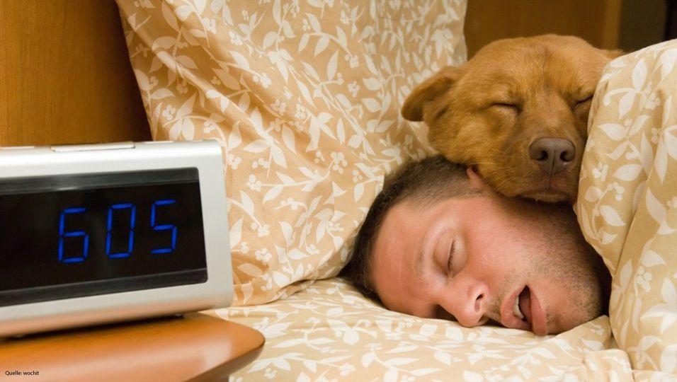 Darf der Hund ins Bett? Hunde-Coach Martin Rütter gibt eindeutige Antwort