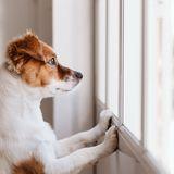 Hund alleine