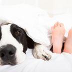 Junge und Hund im Bett