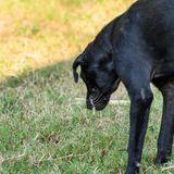 """""""Dein Hund wird vergiftet"""": Unbekannter hinterlässt Frauchen verstörende Botschaft"""