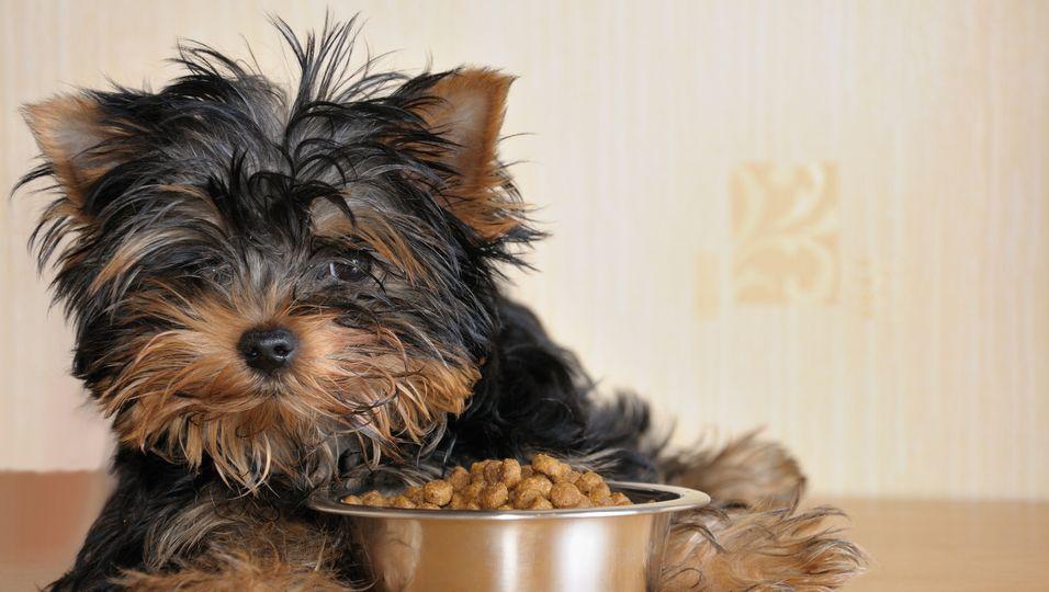 Hundewelpen isst immer nur dir Hälfte wegen schrecklicher Vergangenheit.