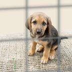 Ungeahnte Wendung: Ängstlicher und verstörter Hund aus dem Tierheim wird zum liebevollsten Haustier