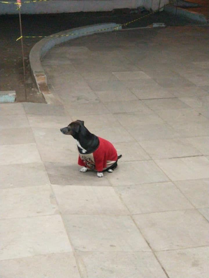 Treuer Hund