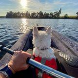 Auf Erkundungstour zu dritt: Mann baut spezielles Kajak, um seine geliebten Hunde auf ein Abenteuer mitzunehmen
