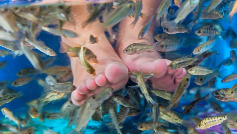 Fischpediküre