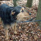 "Er irrte allein umher: Blinder Hunde-Opa einfach im Wald ""entsorgt"""