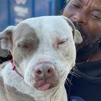 Obdachloser rettet alle Tiere aus brennendem Tierheim