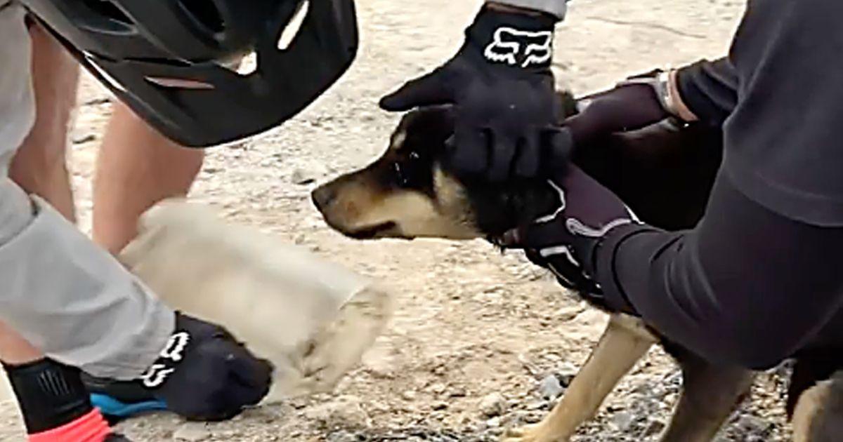 Rettung in auswegloser Situation: Hund steckte mit Kopf in Flasche fest
