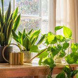 Zimmerpflanzen pflege