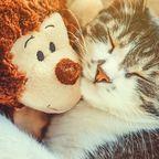Ungewöhnliche Freundschaft: Katze adoptiert verwaistes Affen-Baby