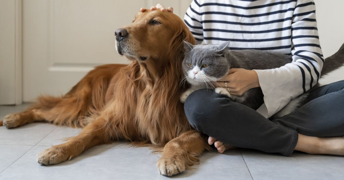 Umfrage: In welchen Onlineshops kaufst Du für dein Haustier ein?