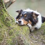 Ein Hund brach am Mannheimer Bahnsteig zusammen - doch sein Herrchen konnte sich die Behandlungskosten nicht leisten.