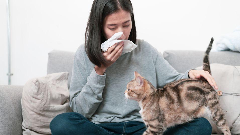 Allergische Frau streichelt Katze