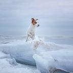 Seemänner entdecken auf einem Eisberg kleinen Welpen - und starten sofort mit der ungewöhnlichen Rettungsaktion