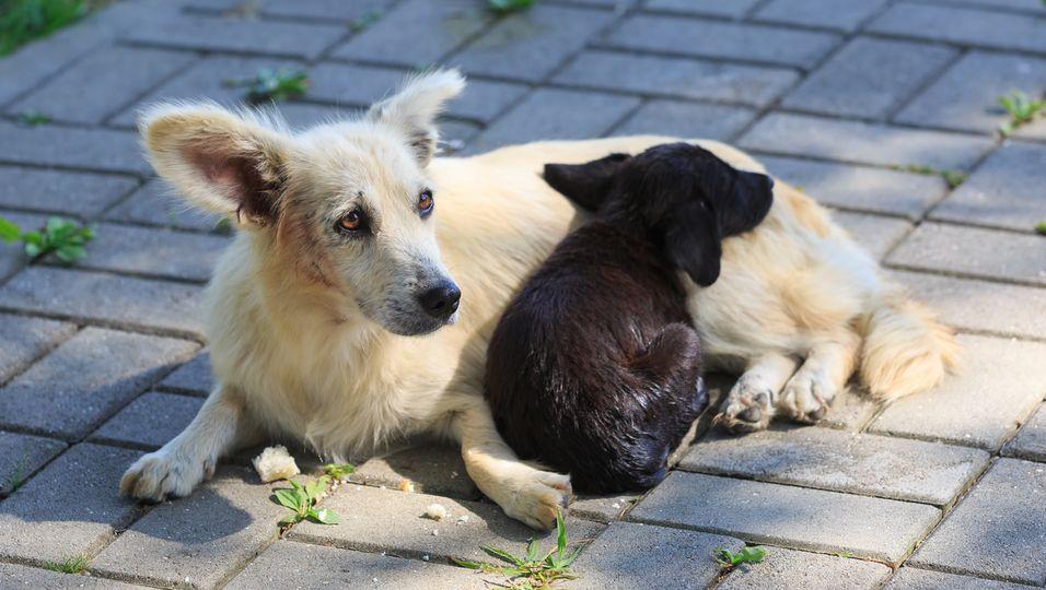 Ihr Baby war verletzt: Hunde-Mama winselt herzzerreißend um Hilfe .jpg