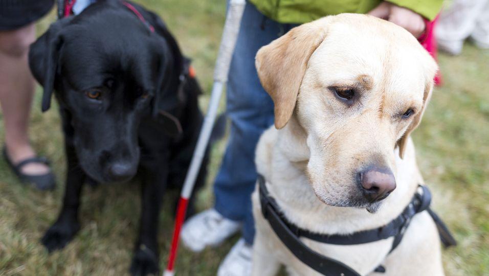 Weil ein Nachbar ihn verpetzt hatte, soll ein blinder Mann seinen Hund abgeben.